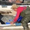 Bozkırın balığı Avrupa sofralarını süslüyor
