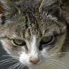 Brüksel'de evcil kediler kısırlaştırılacak