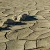Güney Afrika'da susuzluk felaketi