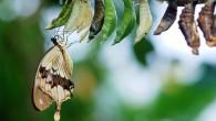 """""""Bir kelebeğin dünyaya verdiği ders"""""""