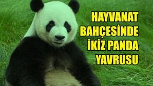 Belçika'da dev pandanın, ikiz yavrusu oldu