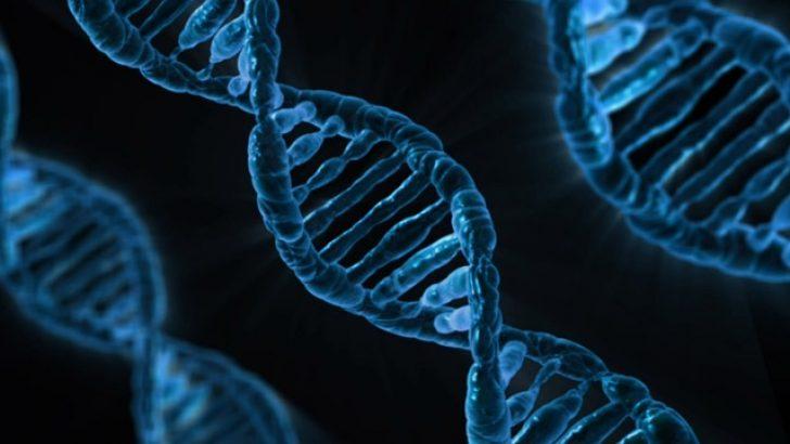 Belçika'nın eski kralından DNA testi yaptırması istendi