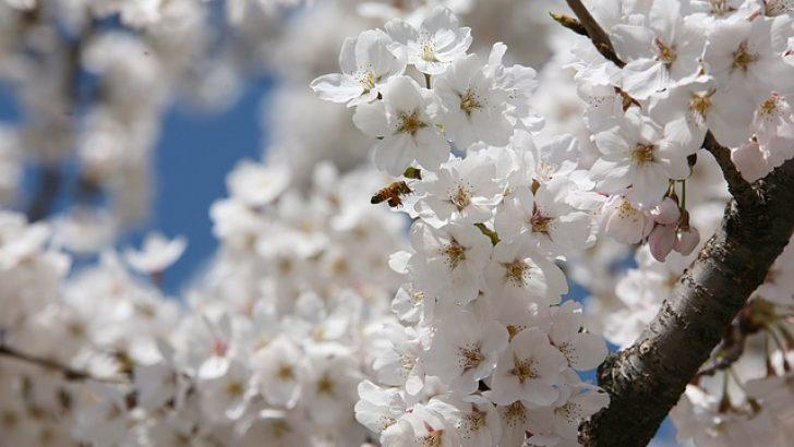 """""""Nisan hüznü"""""""