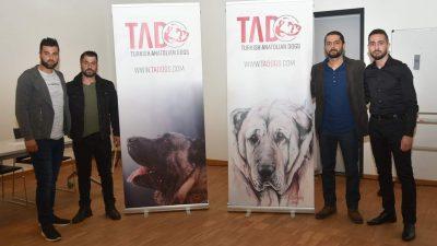 Türk çoban köpekleri tanıtım lansmanı Genk'te gerçekleşti