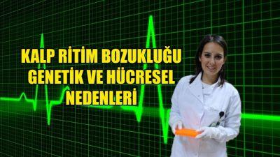 Kalp ritim bozukluğunun genetik ve hücresel nedenleri belirlendi
