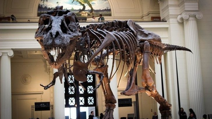 """""""T-Rex"""" dinozor türünün sanılandan oldukça yavaş yürüdüğü belirlendi"""